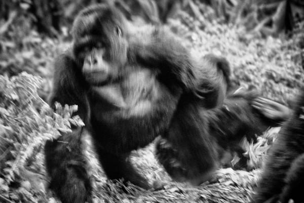 burundi-hunting-child-80-von-103B7AC4230-FEBB-EC75-312B-536F45DF02BC.jpg